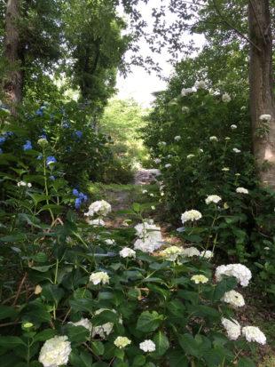 温泉への小道